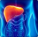 Things to Know About Your Liver