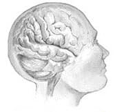 Thumbnail Image:Brains of Sex Addicts May Be Wired Like Those of Drug Addicts, Study Finds