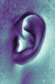 German researchers say certain sounds may boost