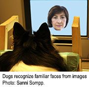 Study tracked dogs' eye movements as they viewed
