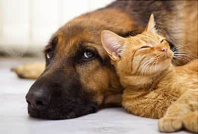 pet health center veterinary care and information from webmd