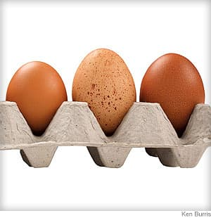 Egg Buyer's Guide