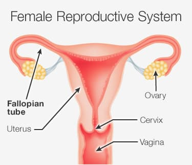 ... have difficulty getting pregnant have a blockage in the fallopian tubes.