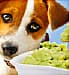 Sad dog and guacamole  