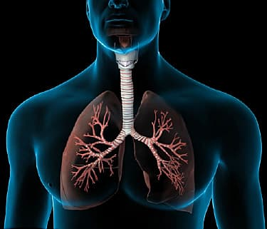 how lungs work When you breathe, you transport oxygen to the body's cells to keep them working , while also clearing your system of the carbon dioxide that.