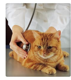 Picture of How to Find the Right Vet for Your Pet