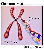 Chromosomes Illustration