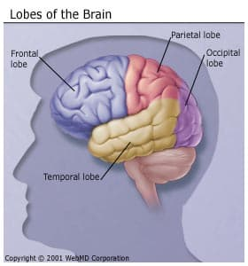 Temporal Lobe Activity | RM.