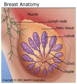 Broken blood vessels in breast