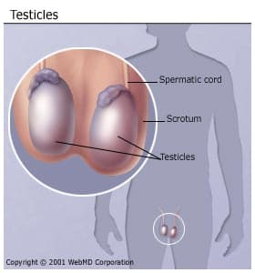 Testicular Cancer Looks Like What