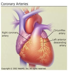 diseases affecting heart and cardiovascular system