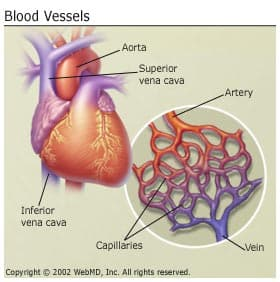 heart disease and how a healthy heart works