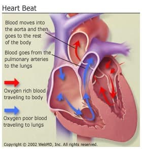 Understand a healthy heart