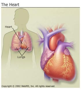 the basics on heart disease