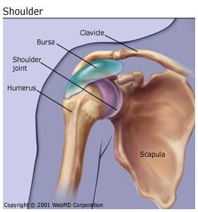 bursitis symptoms, treatment (shoulder, hip, elbow, and more), Human Body