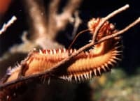 Venomous Worm Photo