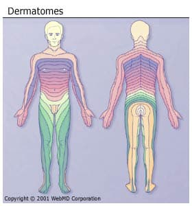 Dermatomes