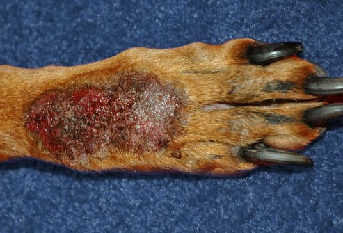 spot treatment includes discouraging the dog from licking either by ...
