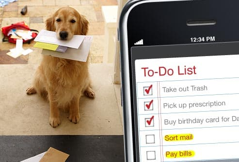 list on phone and dog at door