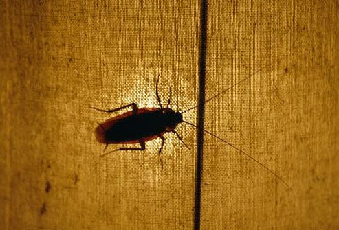 Photo of silhouetted cockroach crawling on fabric