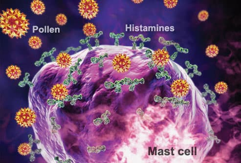 Mast Cell on High Alert