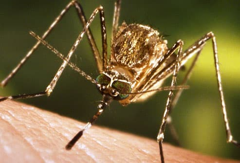 Close-up of mosquito feeding on human skin