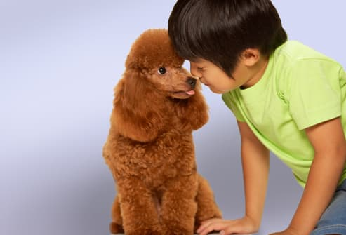 Boy With Toy Poodle
