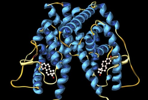Molecular Model Of Estrogen Receptor