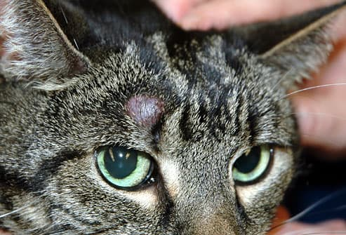 vet may recommend removing it entirely for tumors that have not