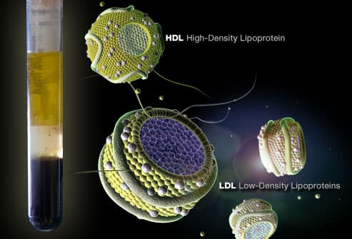 Testing For HDL and LDL
