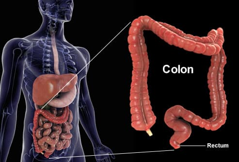 Exploded view of the human colon