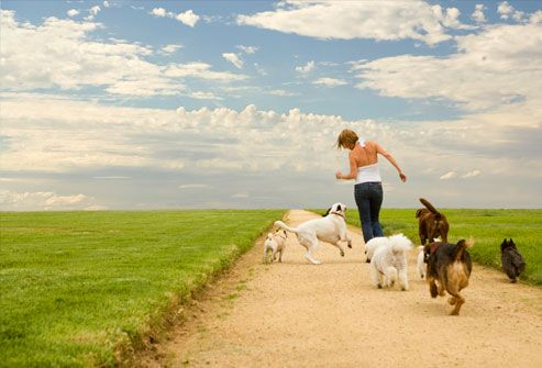 woman and several dogs running on footpath