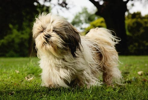 Common Health Problems for Popular Dog Breeds in Pictures