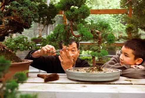 Man tending bonsai garden with grandson