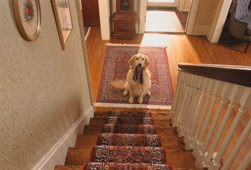 Dog With Leash At Bottom of Stairs