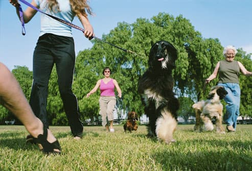 Group of Dogs at Park