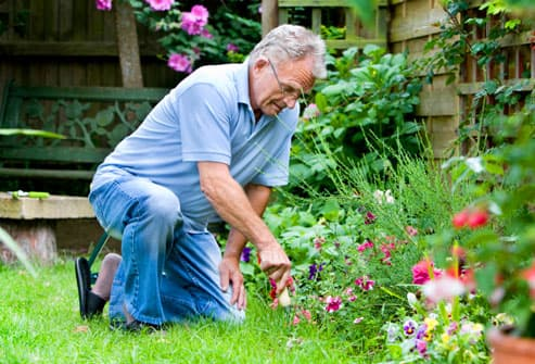 senior man engrossed in his gardening