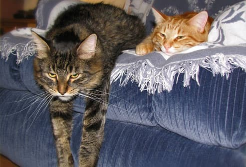 cat and kitten lying on sofa