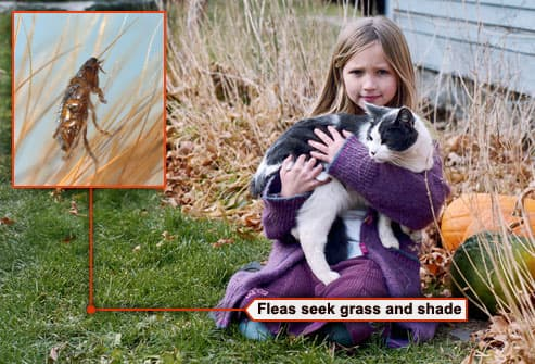 girl in yard with cat and flea on blade of grass