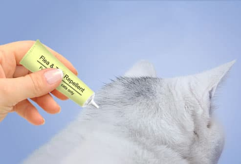 product to keep cats from peeing on carpet