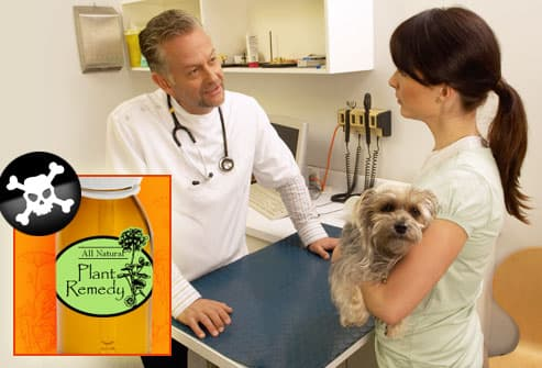 vet talking to woman with dog about herbal remedy