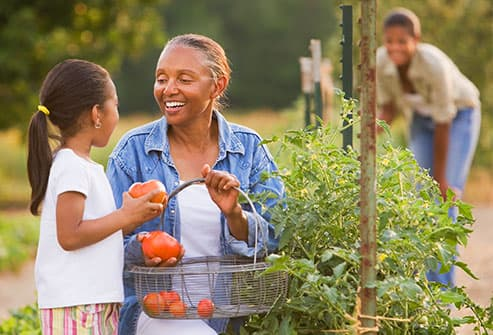 woman picking tomatoes with granddaughter