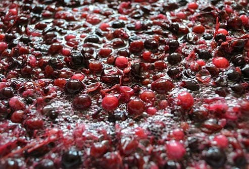 fermenting wine grapes close up
