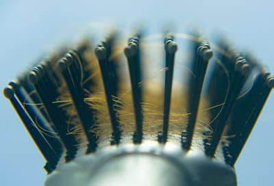 Close-up of hairs in hairbrush