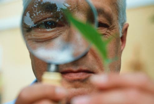 Man looking at a leaf with a magnifying glass
