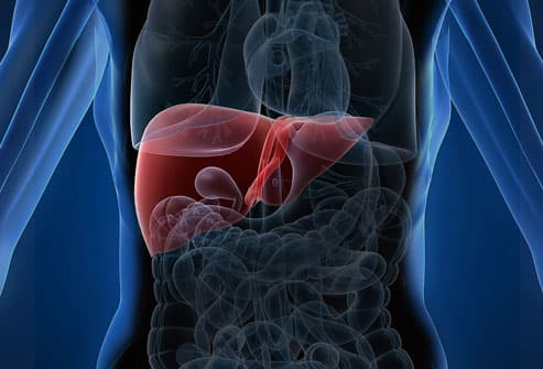 Illustration Highlighting LIver