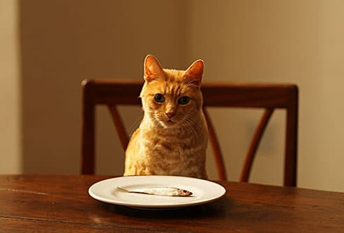 cat sitting at table