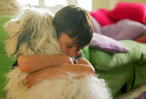 Pet Allergy Pictures Hypoallergenic Dogs And Cats