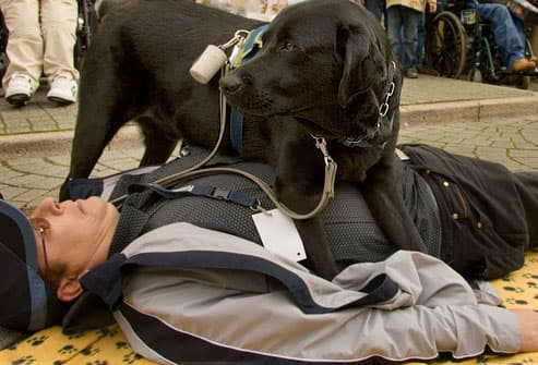 Trained seizure dog with owner