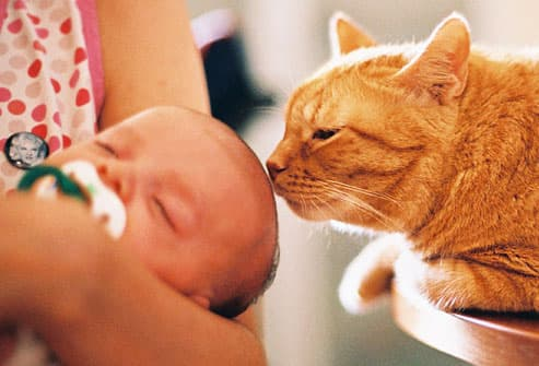 Cat kisses sleeping baby